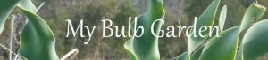 My Bulb Garden Shop