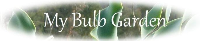 y Bulb Garden Store